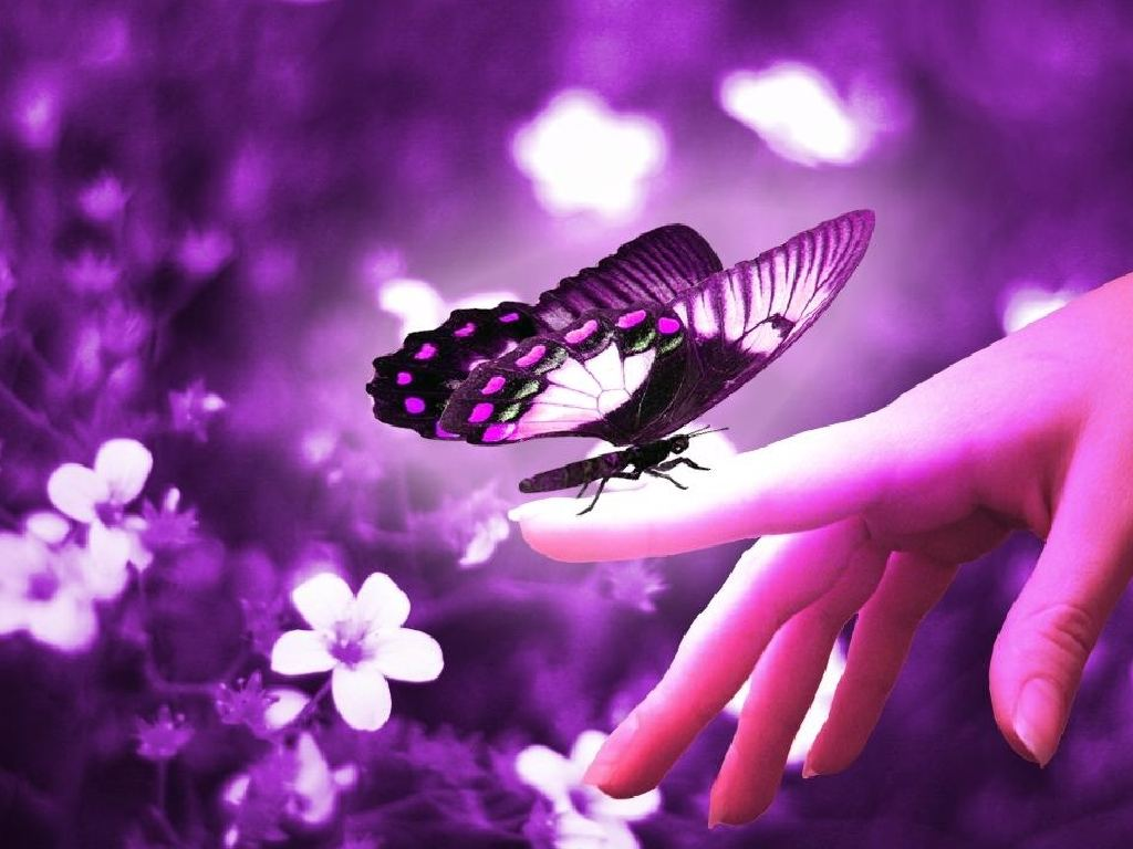 purple butterfly monday